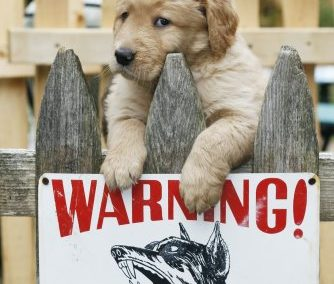 Dog Theft Safety Advice: Dogs Trust recommends Home CCTV