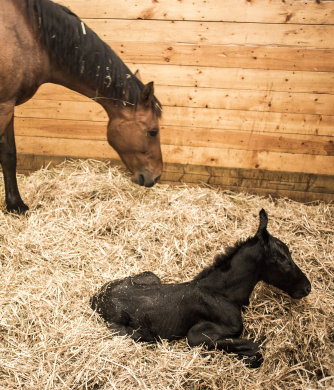 Equestrian Foaling CCTV Systems from ESP Security