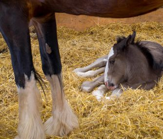 Foaling Camera CCTV & Farmyard Security Systems